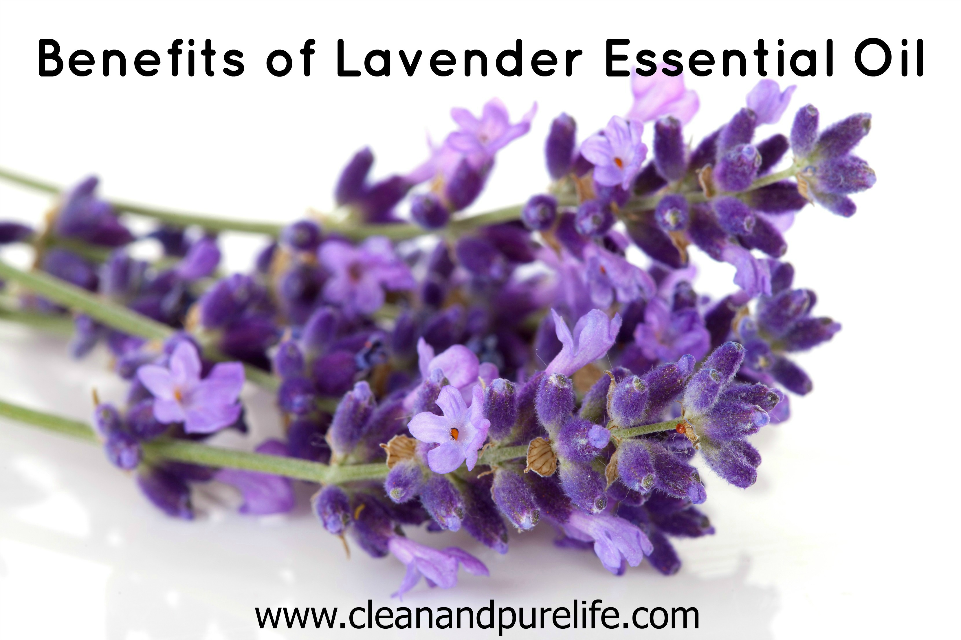 VARIOUS LAVENDER OIL BENEFITS